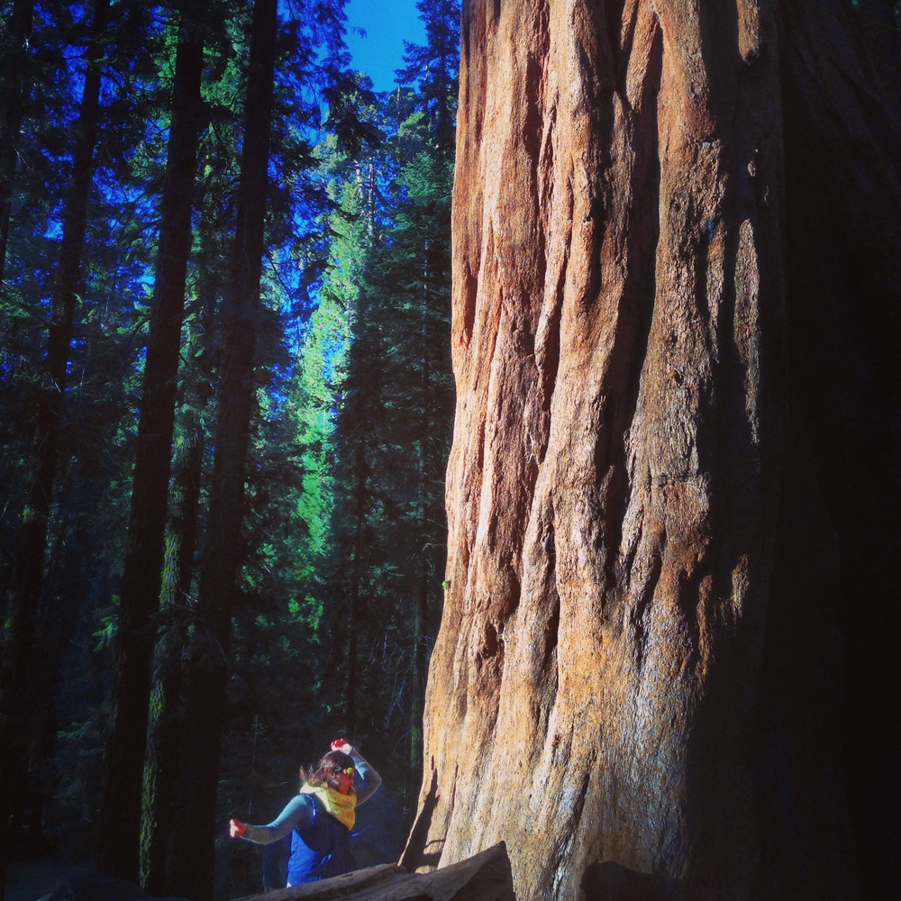 Rochelle making a pilgrimage to the Sequoia or Se(QOYA) trees one New Year's Day