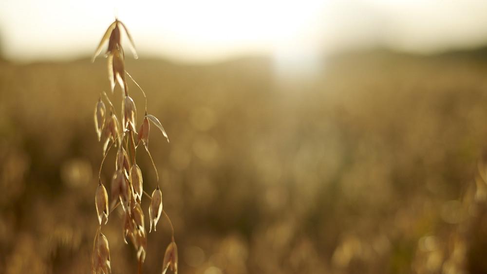 Global leading supplier in oats   oat beta glucans, fine oat flours and oat oils   Read more