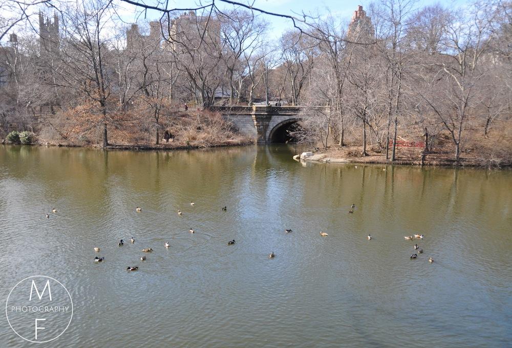 So Many Ducks - It Looked Like Water Ballet