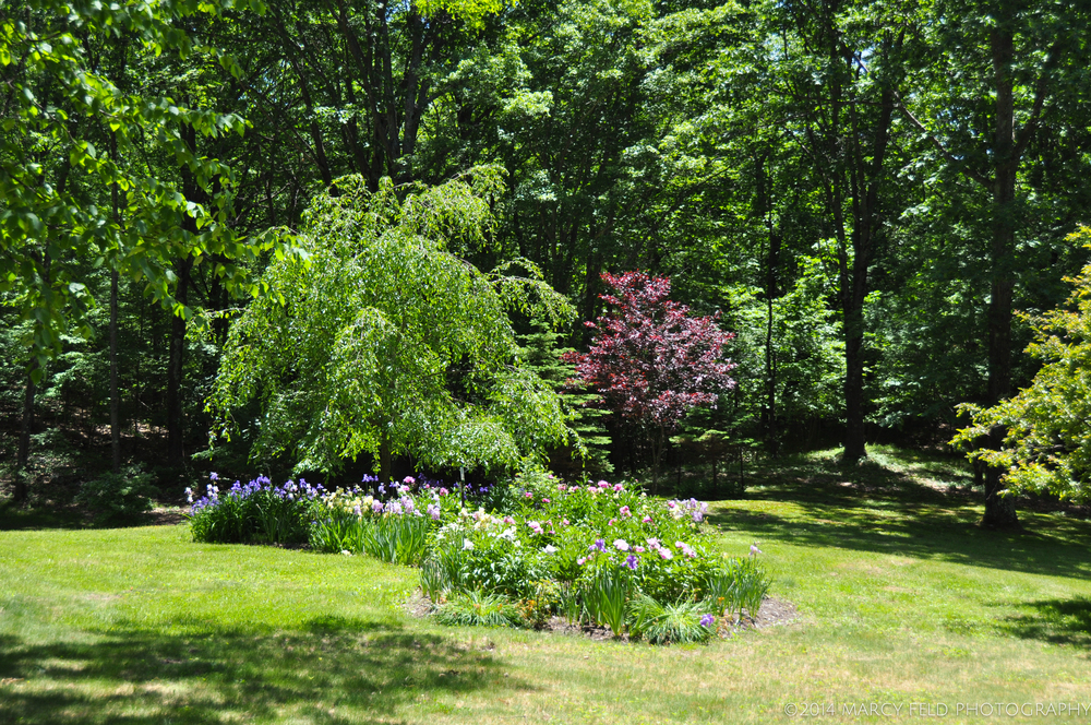View of the Weeping Cherry bed
