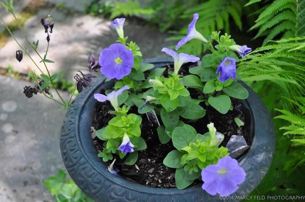 Petunia Urn 'sky blue'