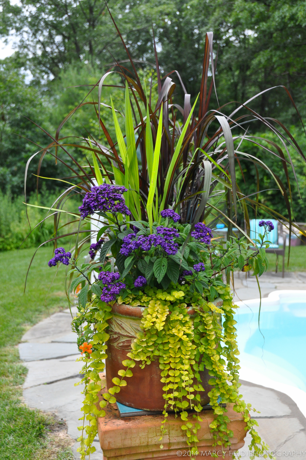 Another Heliotrope filled planter with a glimpse of the pool