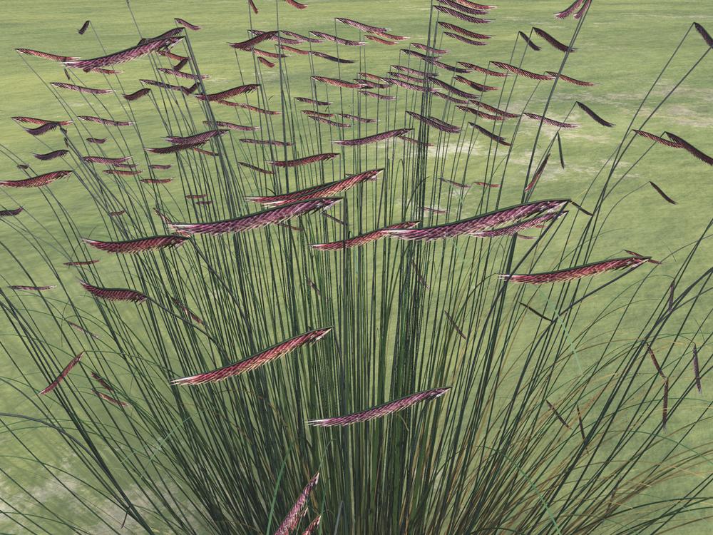 Seed detail