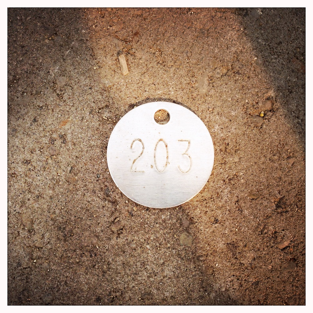 My very own P-Patch dog tag, plot #203.