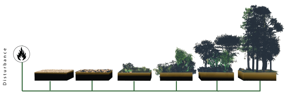 Ecological succession diagram. (Courtesy: Google image search).