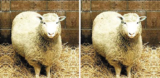 Don't let your charterparty become Dolly the Sheep.