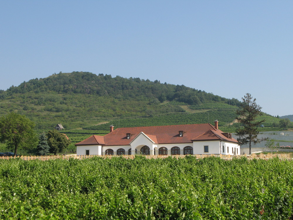 Patricius Winery