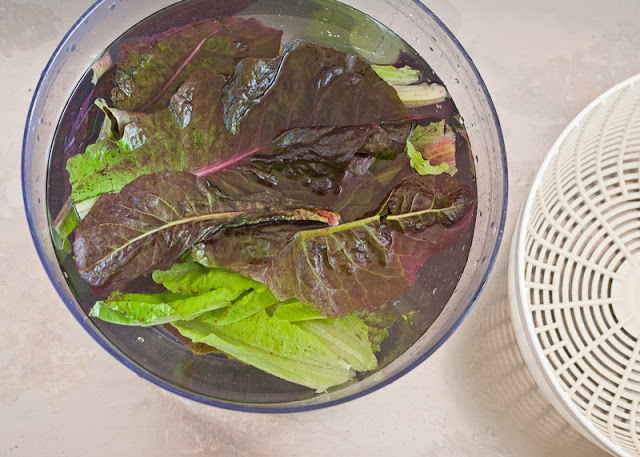 Washing+lettuce.jpg