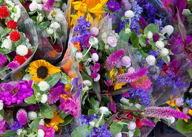 Fall+flowers-8932.jpg