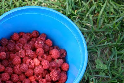 Bucket+o'+berries.jpg