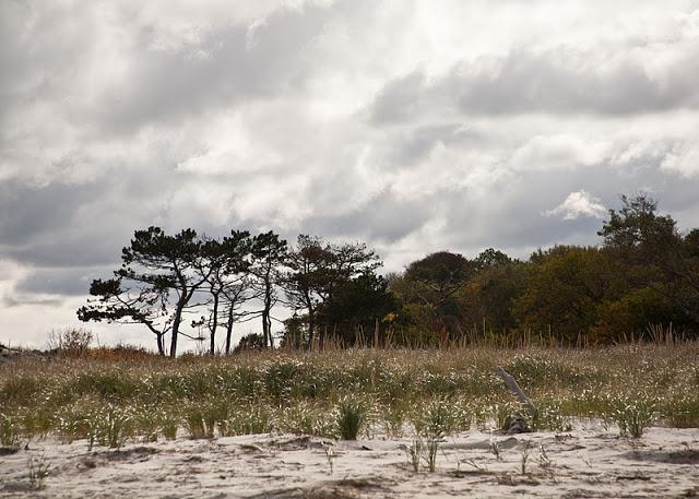 Crane+beach+trees-sky-0015.jpg