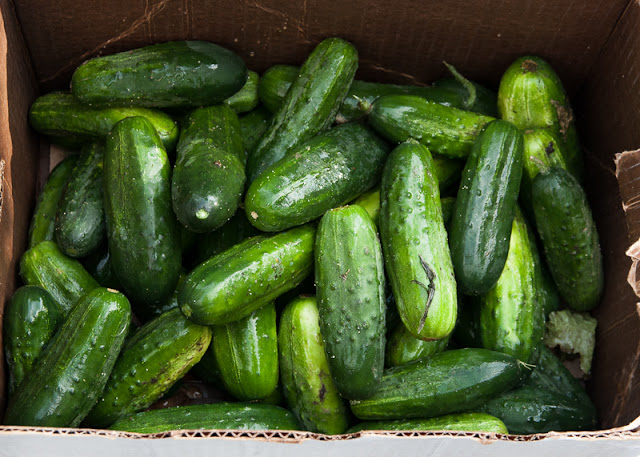 cucumbers+in+cardboard+box.jpg