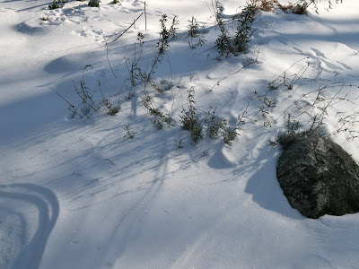 Snow+covered+herb+garden.jpg