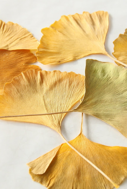 Gingko+leaves.jpg