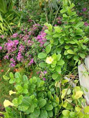 Grand+Velas+flowers.jpg