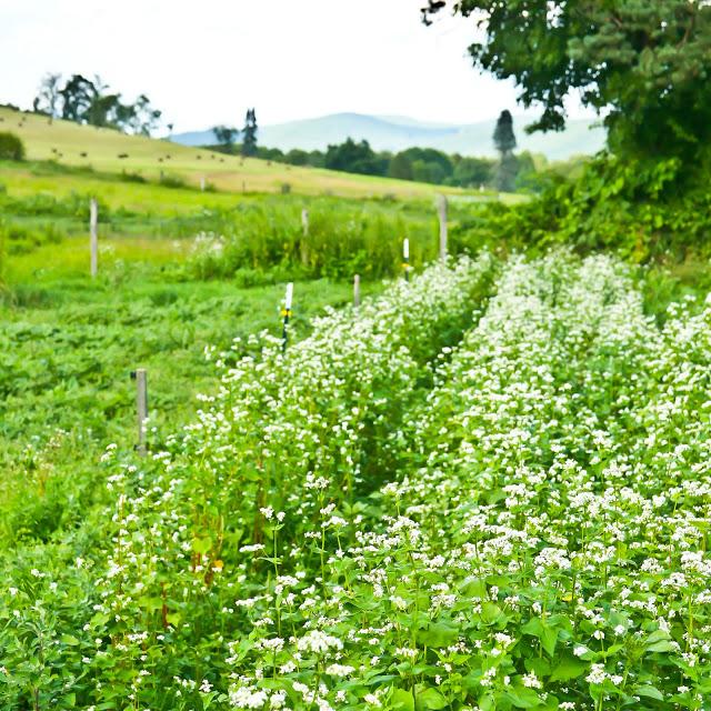 Green+meadow-11.jpg