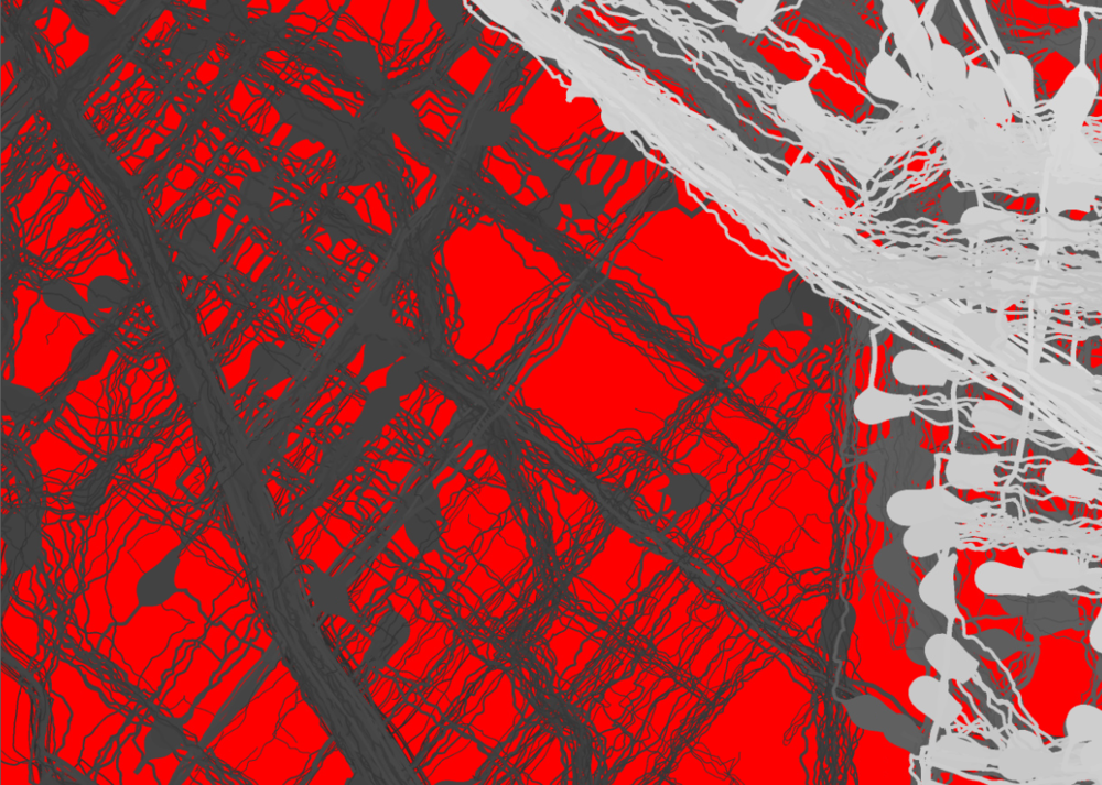 Small piece of rendered neurons. Red is the background and grayscale value indicates time of firing.