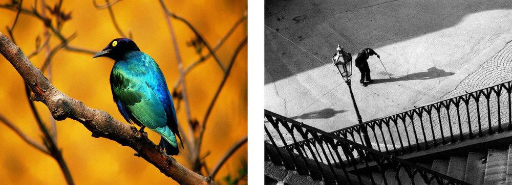 kontrast.jpg