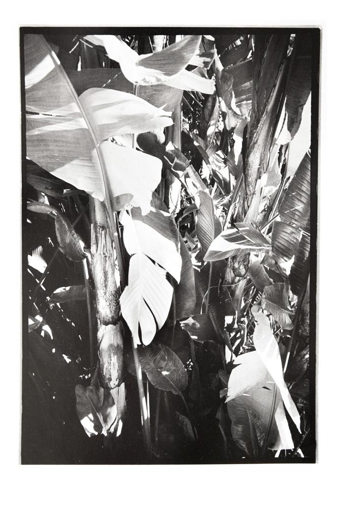 Silver01.jpg