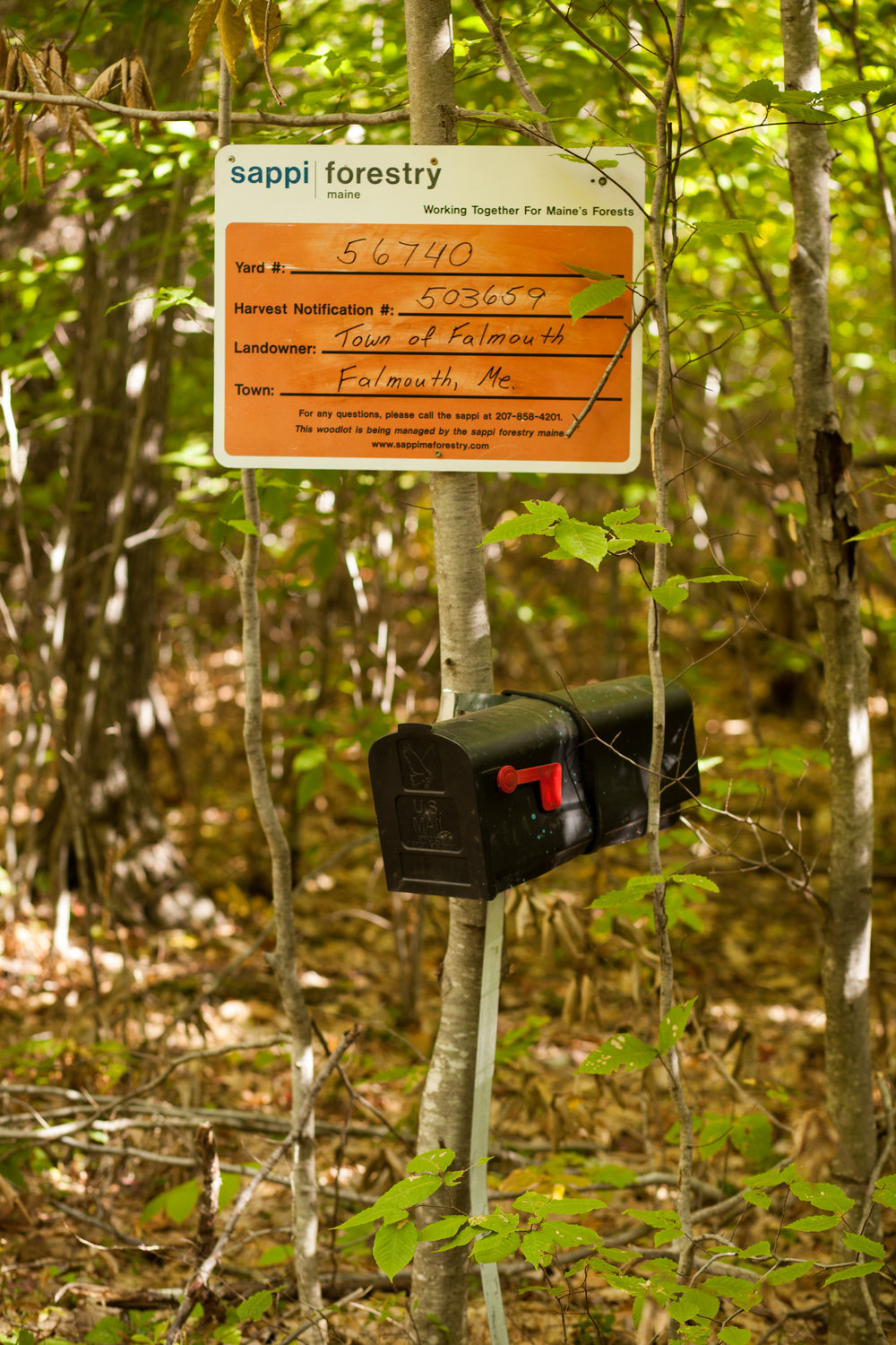 North Falmouth Sappi Forest_100217-382.JPG
