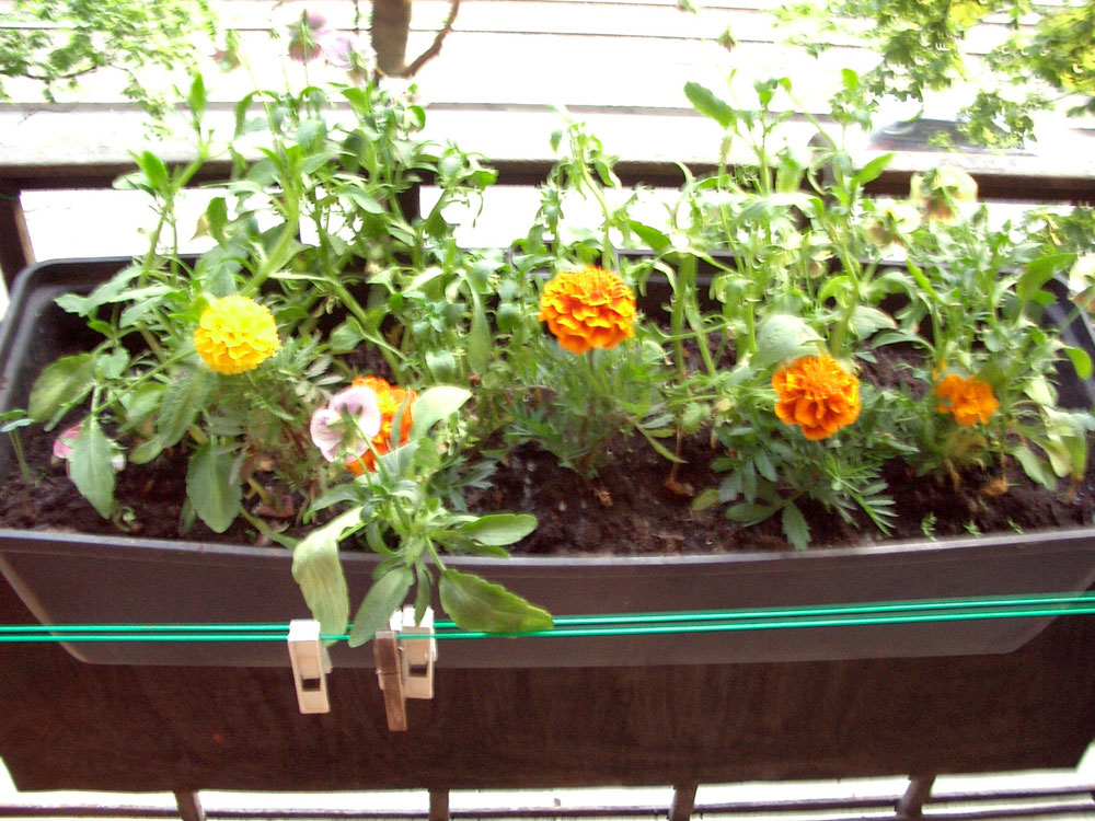 Windowbox flowers in the Lesnoy flat
