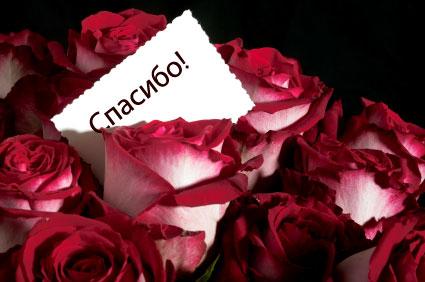 Spasibo roses