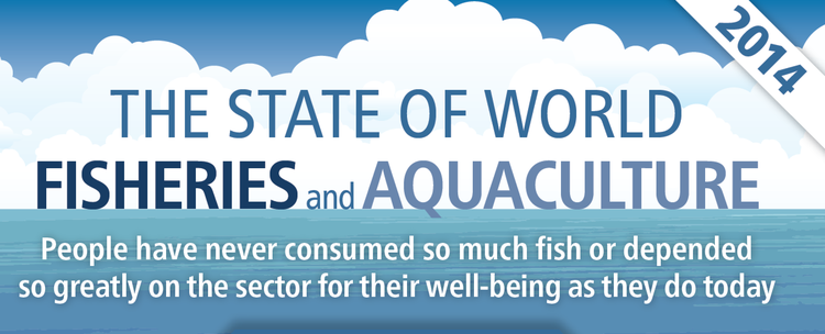 The state of world fisheries and aquaculture 2014 francisco blaha according to the latest edition of faos the state of world fisheries and aquaculture global fisheries and aquaculture production totalled 158 million sciox Gallery