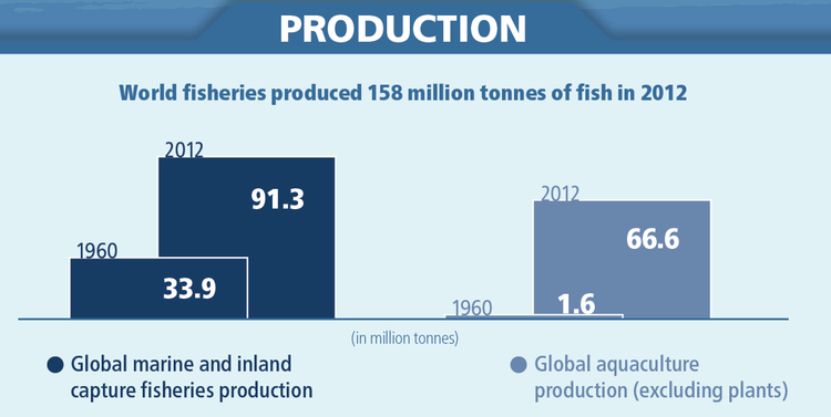 The state of world fisheries and aquaculture 2014 francisco blaha at the same time per capita fish consumption has soared from 10 kg in the 1960s to more than 19 kg in 2012 sciox Gallery