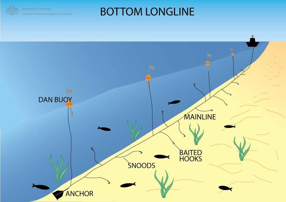 Bottom-longline.jpg