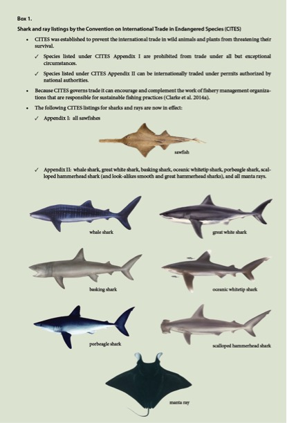 analysis of suppositions in shark fisheries francisco blaha these cites listings are a spur to integrate international trade information fishery management mechanisms in order to better regulate shark harvests