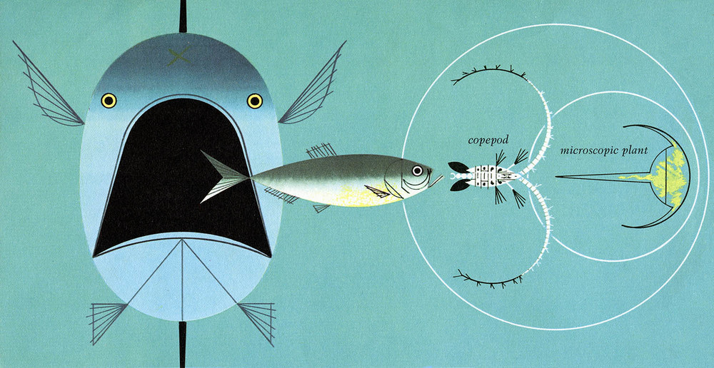 the image has no relation to the tuna treaty, but i really like it :-)