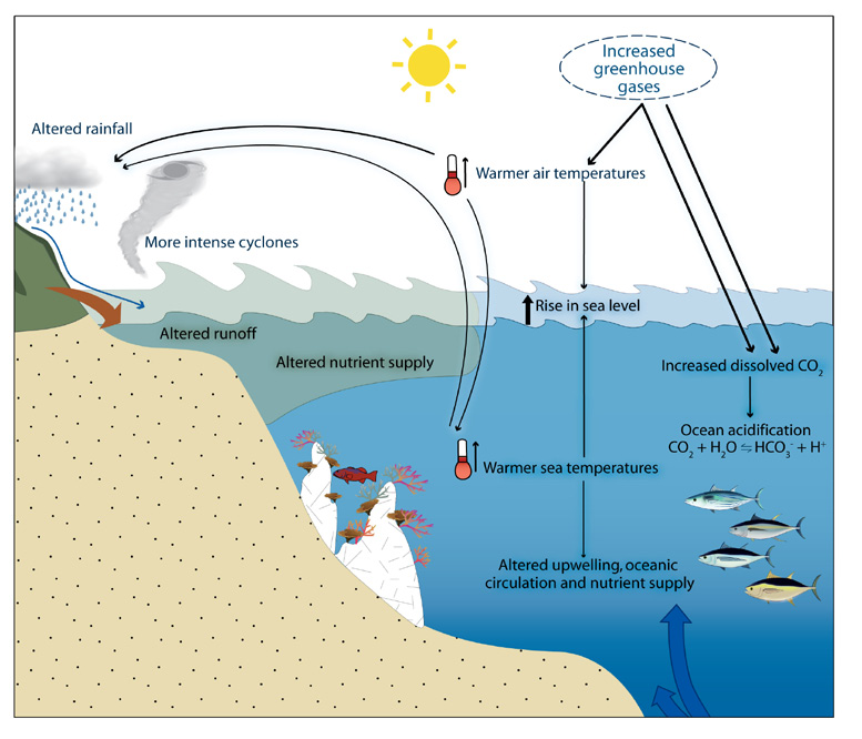 Generalised effects of increased greenhouse gases on oceanic and coastal ecosystems in the tropical Pacific