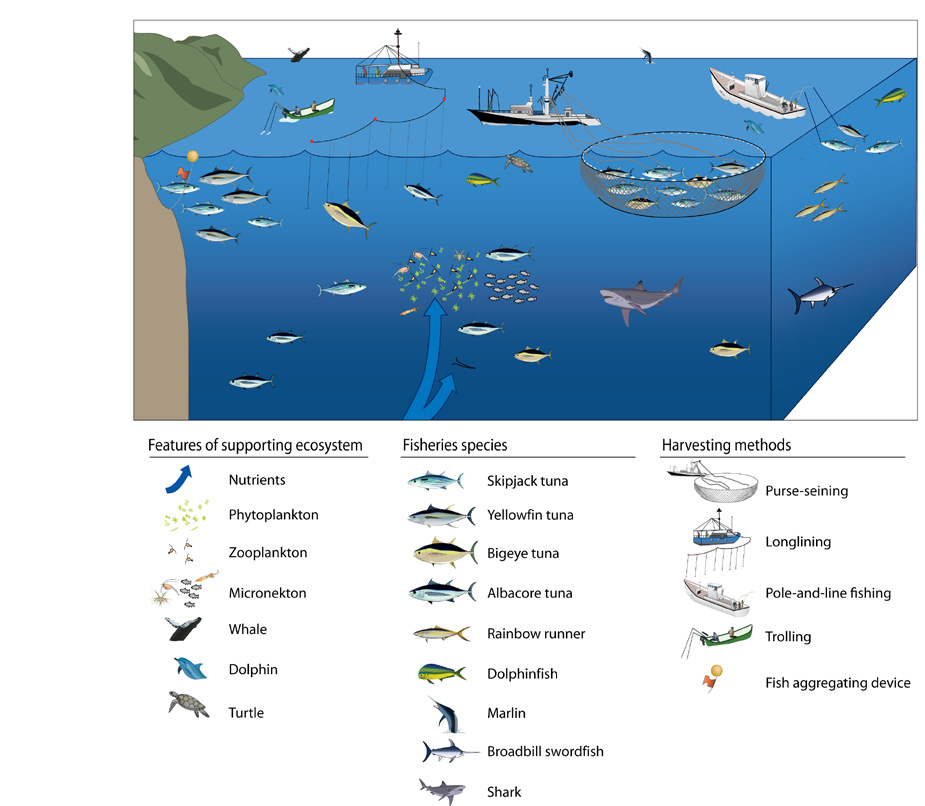 The basis of tuna production in the Western and Central Pacific Ocean, and the main methods used to harvest tuna