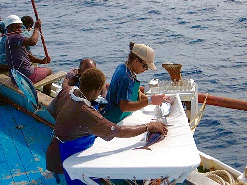 My friend  Cynthia Wickham  tagging tuna in middle of the Pacific