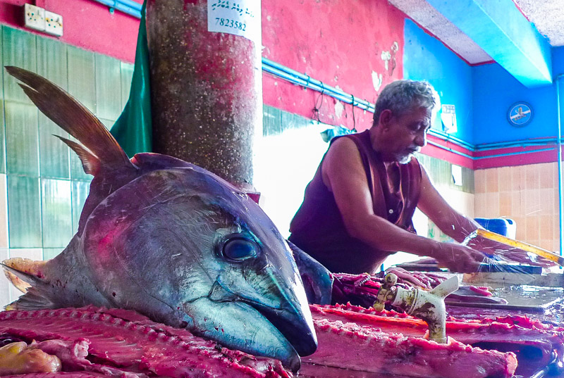 Fish Market in Male, Maldives