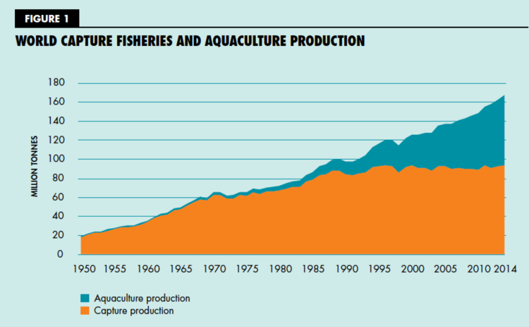 The state of the world fisheries and aquaculture 2016 growth in the global supply of fish for human consumption has outpaced population growth in the past five decades increasing at an average annual rate of sciox Gallery
