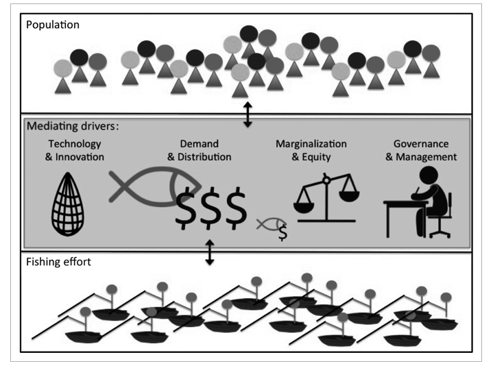 Examples of drivers mediating and expanding the relationship between population growth and fishing effort