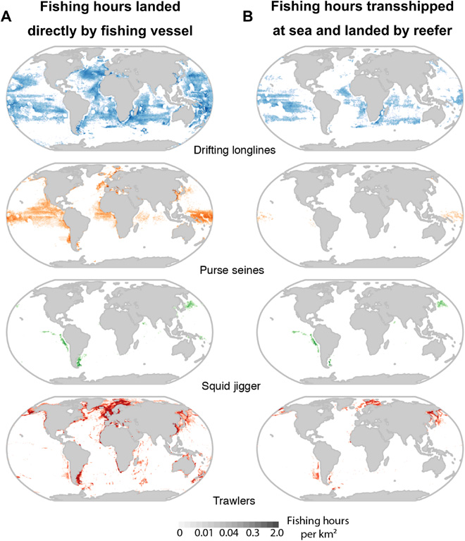 Spatial patterns of landed versus transshipped fishing effort. (from the Global Hot Spots paper)