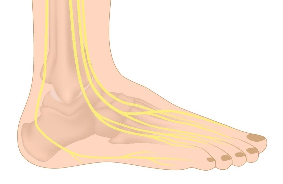 Nerves of the Foot & Ankle