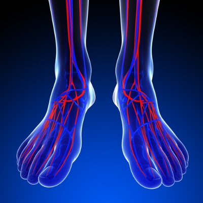 Veins in feet