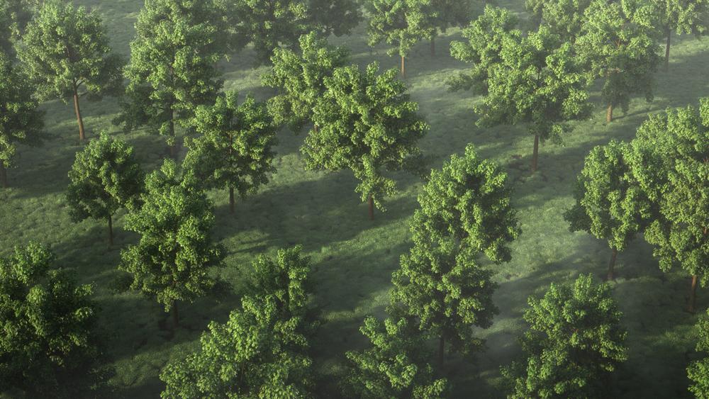 mantissa_generic_trees.png
