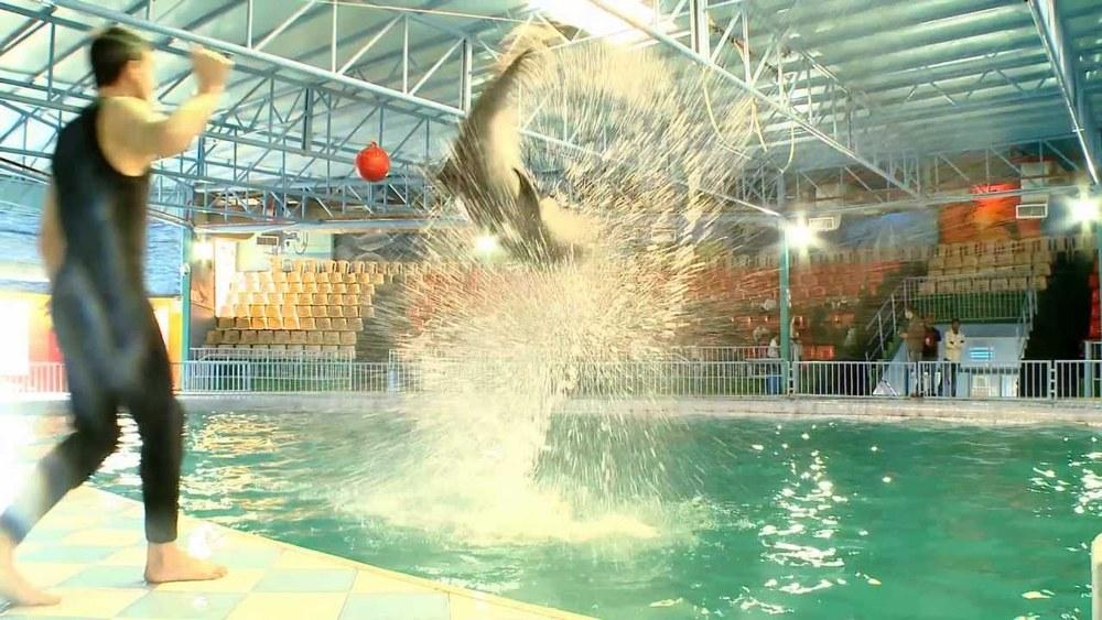 Bahrain Dolphin Park - Indoor Show