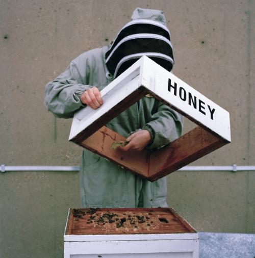 Lynda Laird,  Urban Beekeeping , 2014
