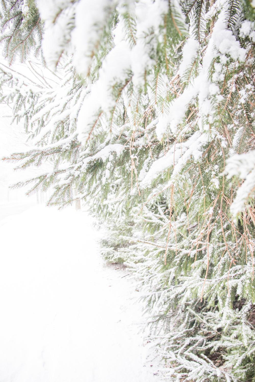 Snow-0070.jpg