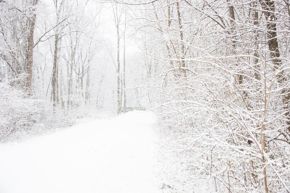 Snow-0077.jpg