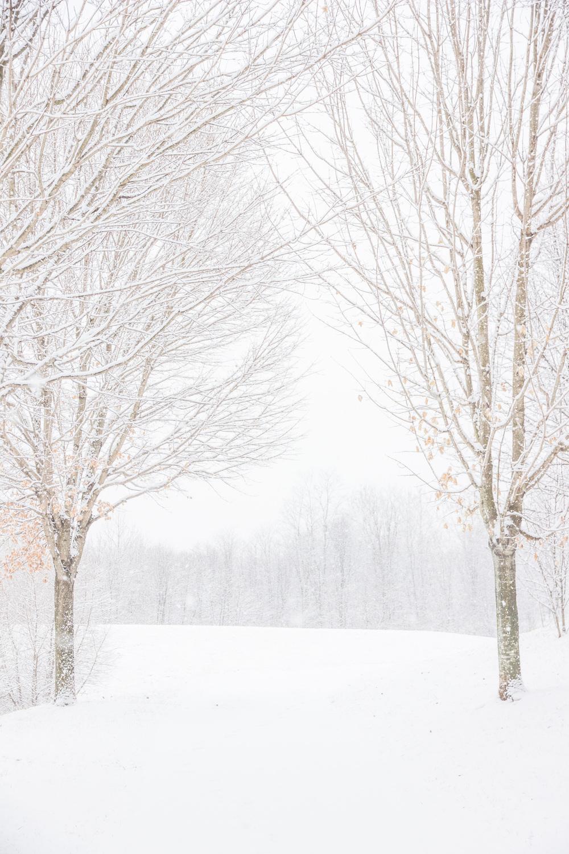 Snow-0088.jpg