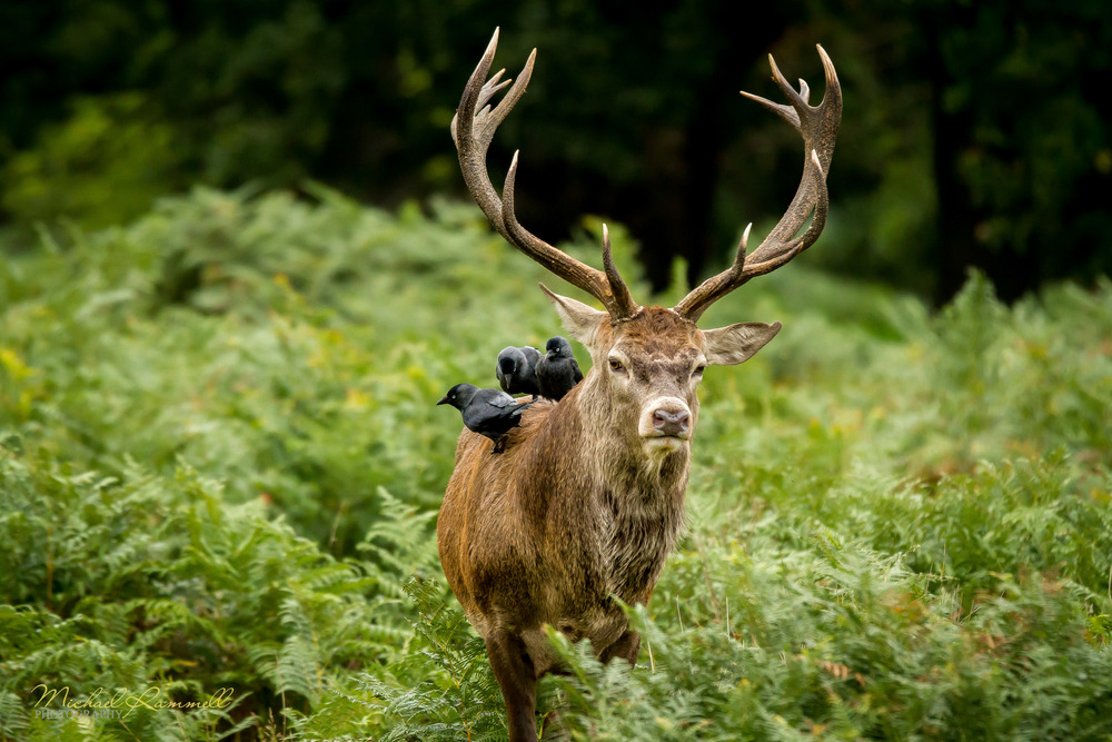 RammellPhotography.com_Richmond Park 2013-09-6.jpg