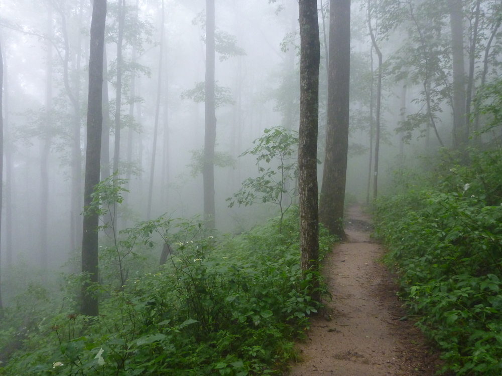 Foggy hike