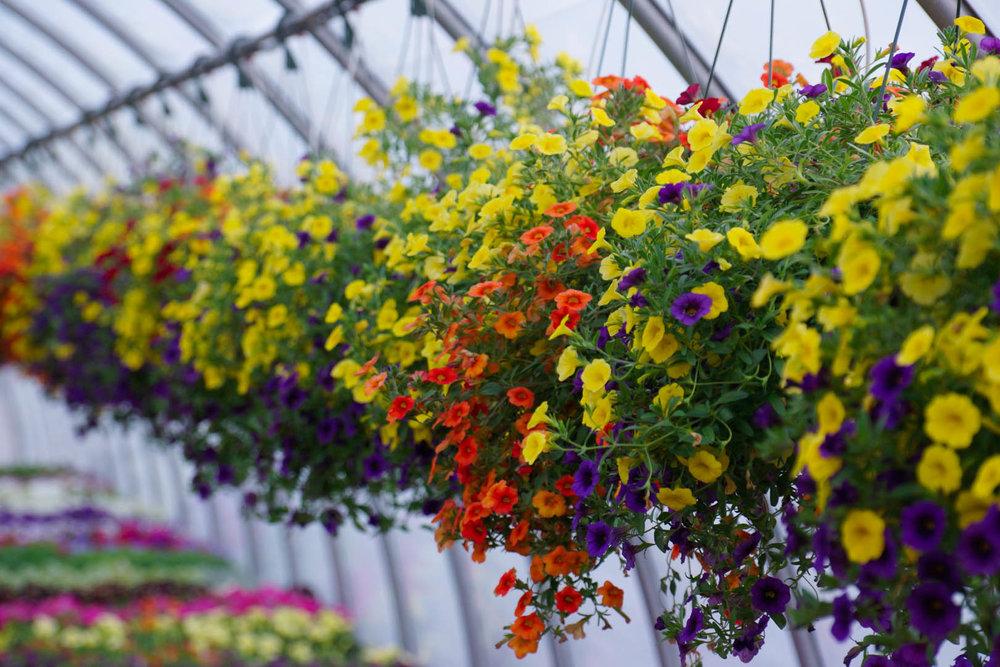 Garden — Brigiotta\'s Farmland Produce & Garden Center, Inc.