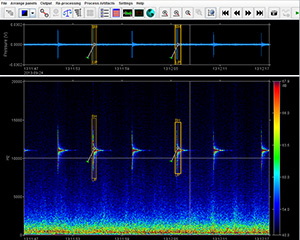 SpectroPlotter acoustic data analysis software showing automated marine mammal call detections